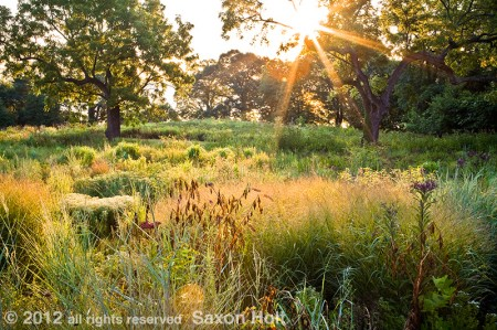 Dawn - Virginia Meadow Garden AHS