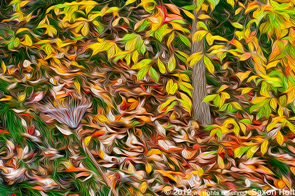"""Leaves Left Unraked"" uses PhotoShop filters to manipulate the original photo."