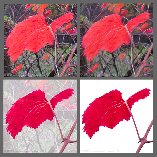 With digital tools this red grape leaf in glorious color loses its context on my back fence.  Is it still a garden photo ?