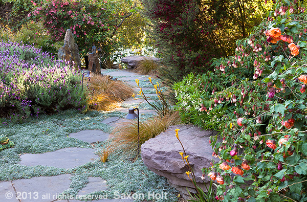 Stone seat by path with flowering maple