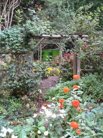 Zinnias in cutting garden Photo Courtesy of Fran Sorin