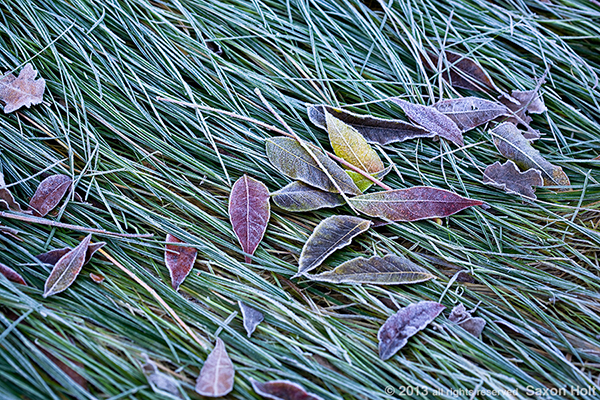 frost leaves on meadow lawn