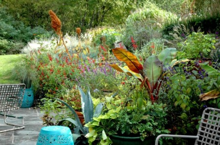 Self Seeded Amaranths in perennial plantings Photo Courtesy of Fran Sorin