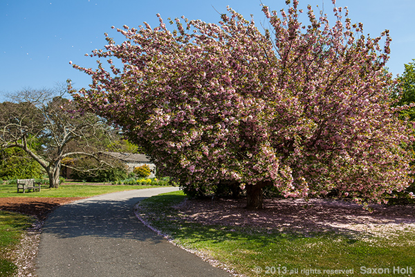 holt_NorfolkBotanical_3