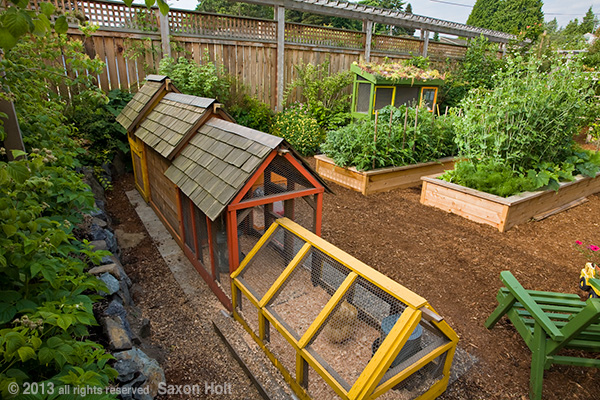 Sustainable Backyard Ideas :  coop in back of small space backyard organic sustainable garden