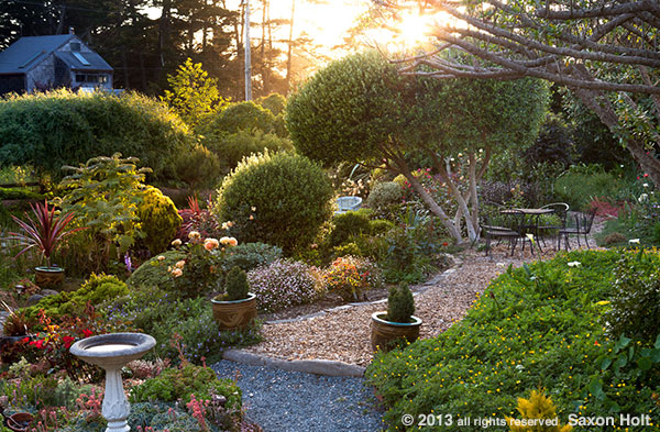 sunburst light in garden photo