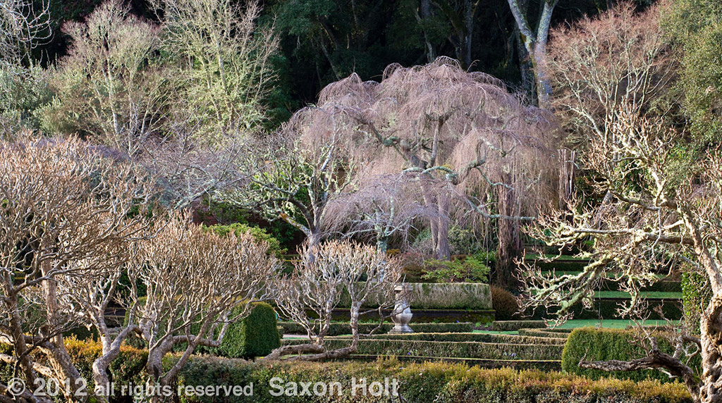 winter trees blush - Filoli