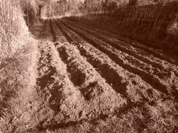 Freshly tilled soil