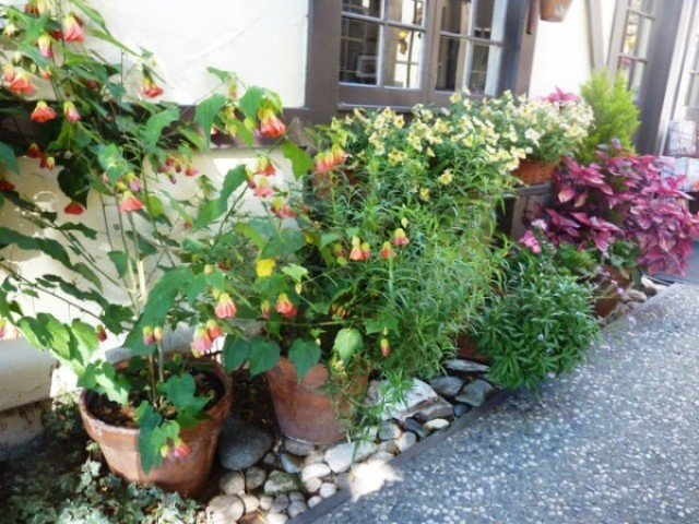 2013-09-29-Carmel-92913-002.jpg-flower-containers-outside-of-store-re-sized.-640x480