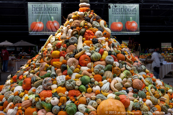 pumpkin winter squash mountain