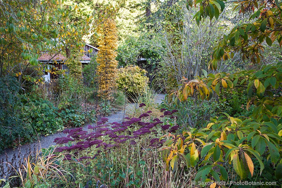 autumn garden with mixed border