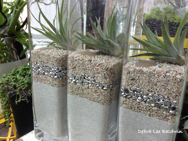 affordable glass containers tillandsias air plants with air plant containers