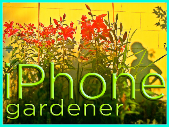David Perry's iPhone Gardener