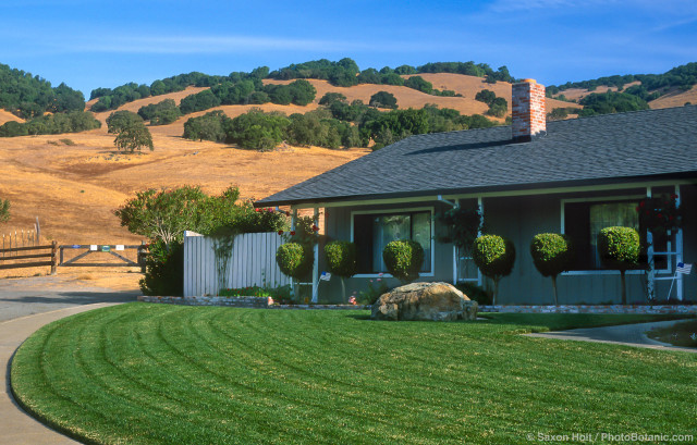 California suburban lawn and summer-dry hills