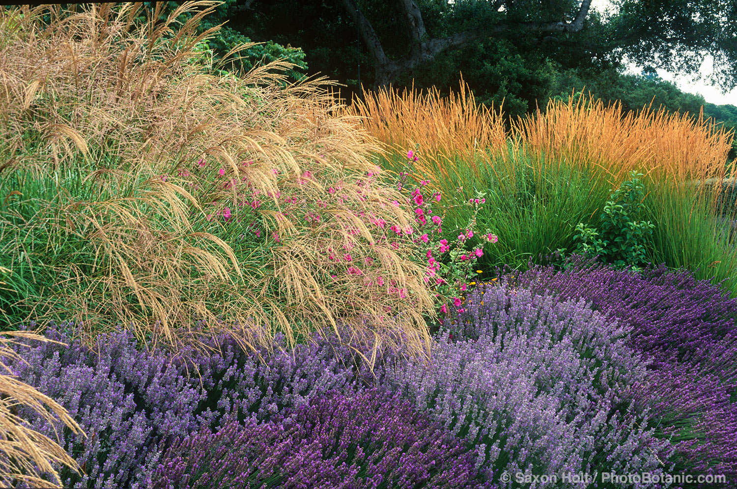 Garden photographer saxon holt explains the summer dry for Planting plans with grasses