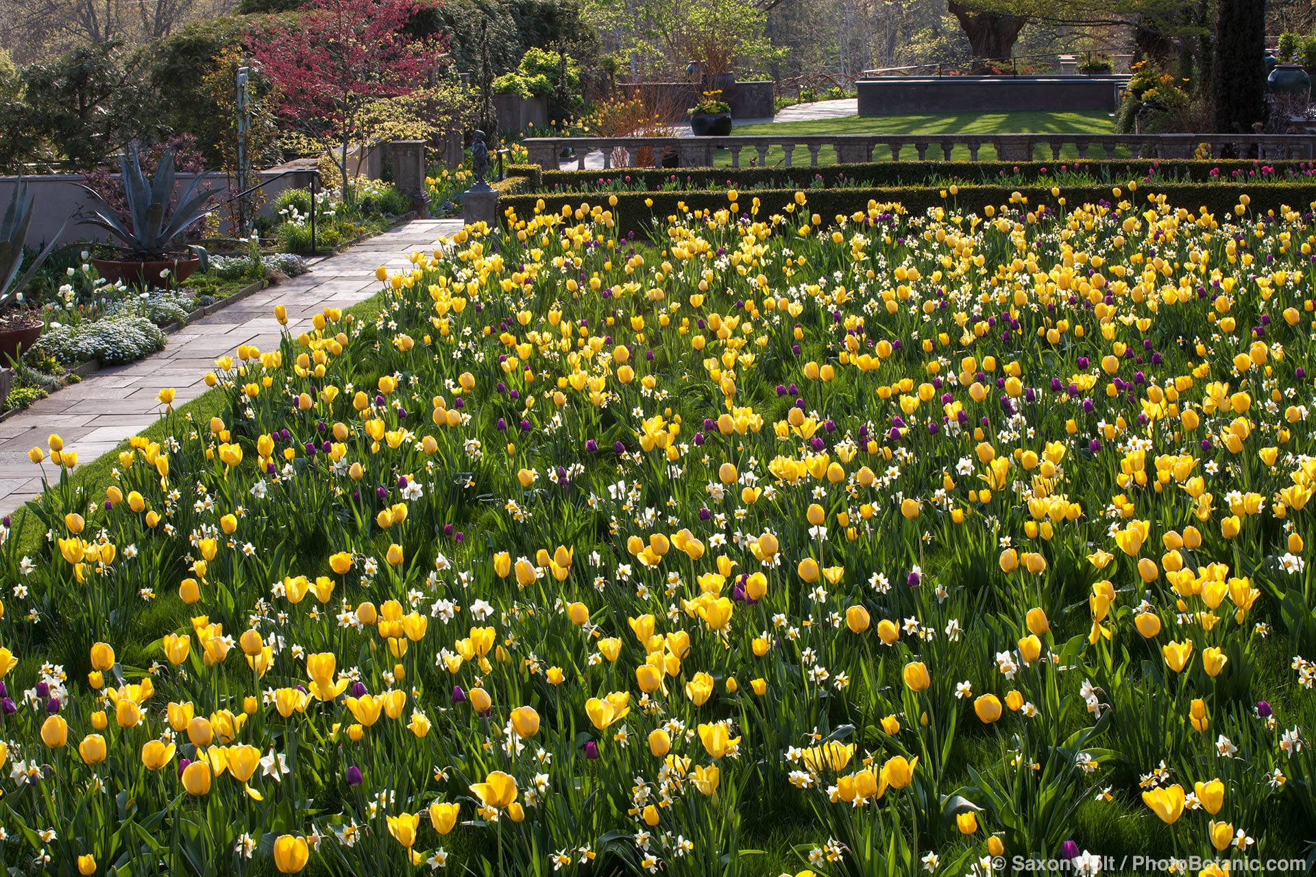 Spring tulips at Chanticleer Garden