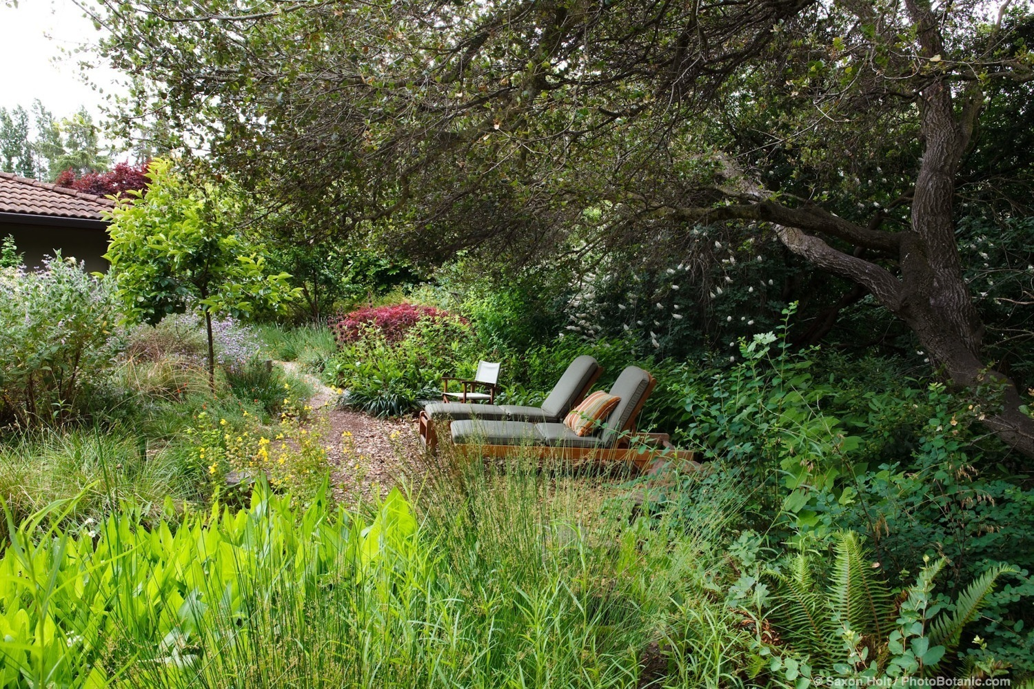 How To Plant Grass Under Oak Trees : Lounge chairs under shady oak trees in california native plant garden