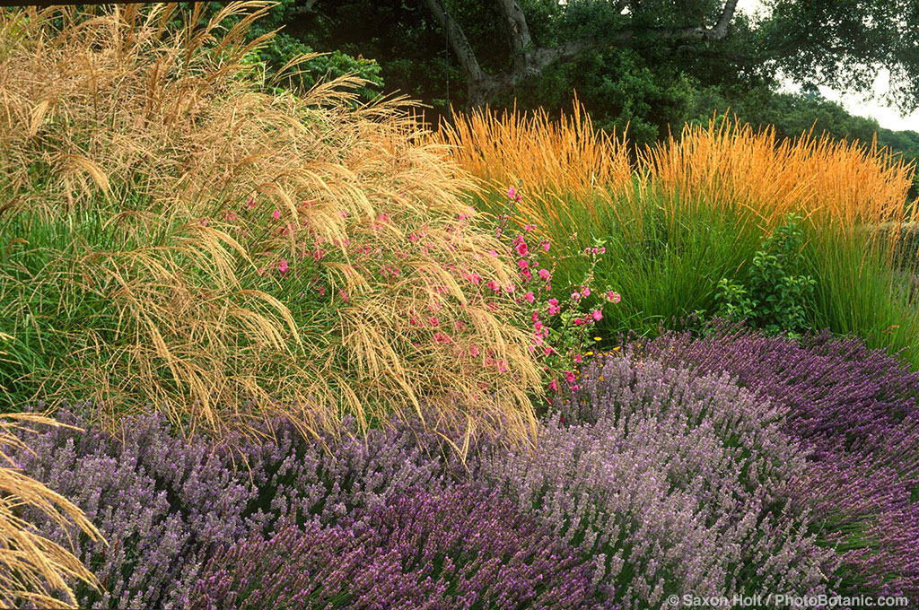 Landscaping Native Grasses : Gardens here