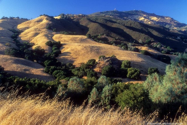 California chaparrel and annual grasses habitat in summer at Mt. Diablo state park