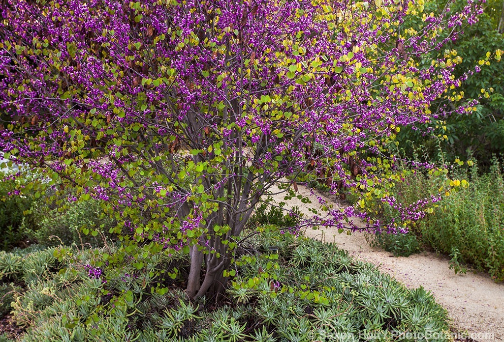 William s main 39 s blog gardening with native plants for Southern california native plants