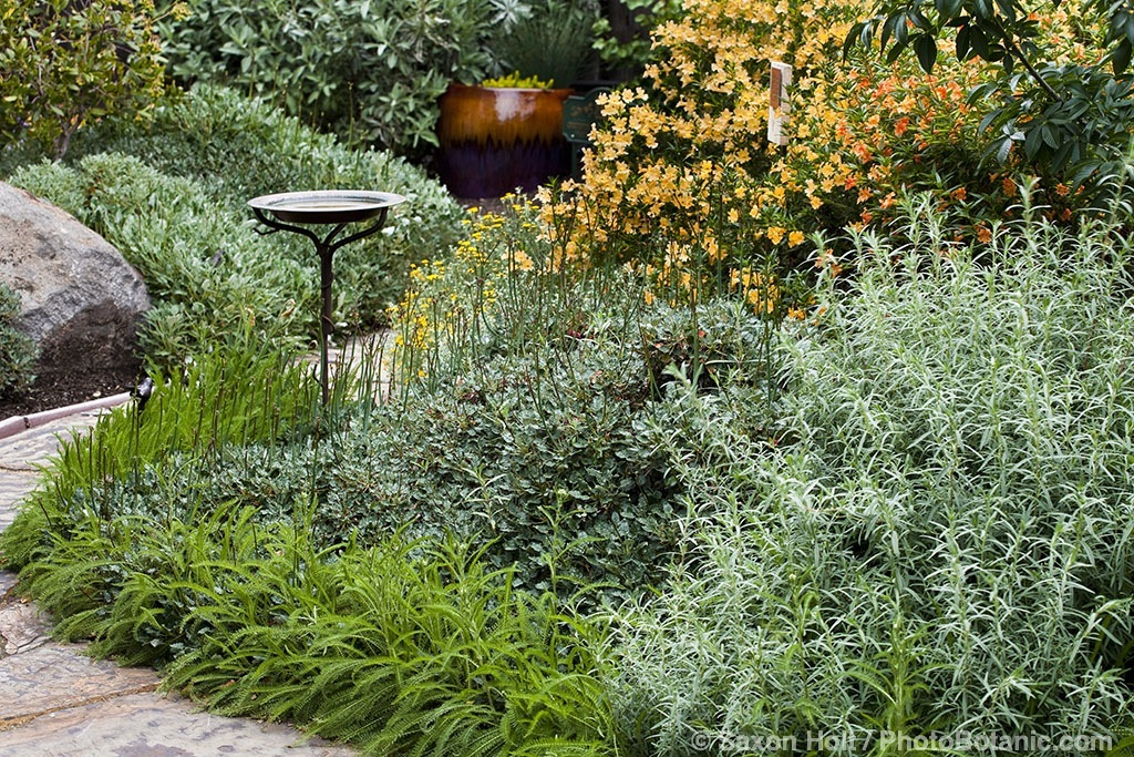 Gardening with native plants - Mixed style gardens ...