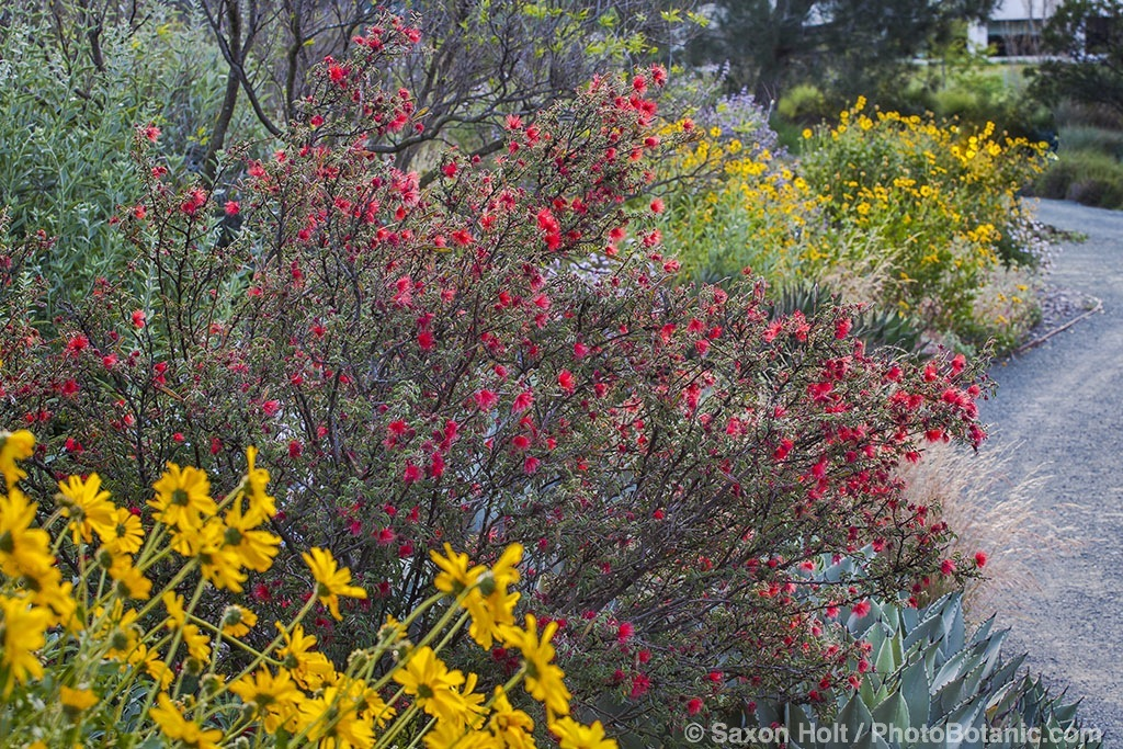 Gardening with native plants California native plants for the garden