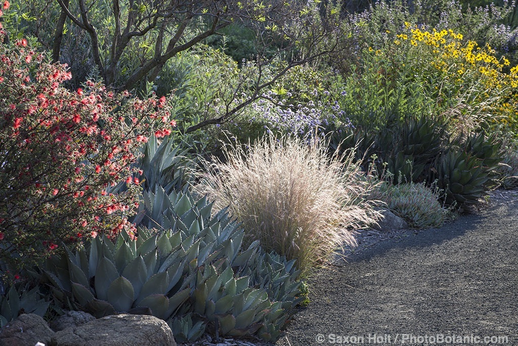 William S Main 39 S Blog Gardening With Native Plants