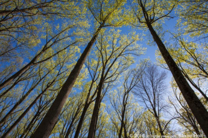 Wild in the Eastern Deciduous Forest
