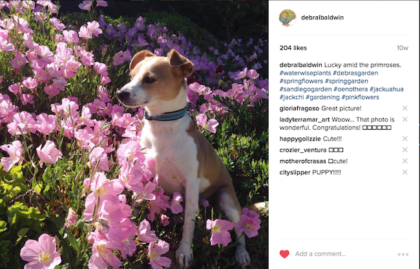 On Instagram, Nobody Cares About Your Dog