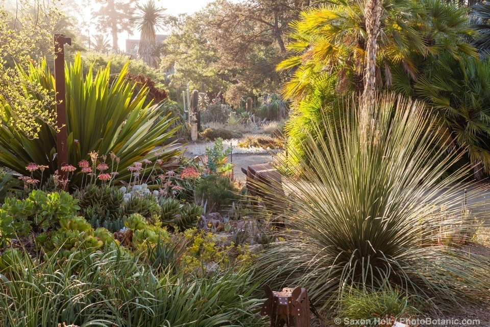Early morning light in the Ruth Bancroft Garden