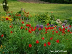Wildflowers at Chanticleeer