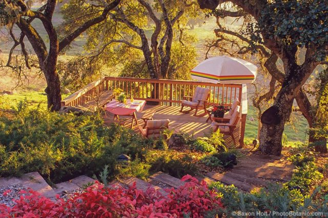 Wooden stairs leading to a hillside deck under Oak trees inSonoma summer-dry garden