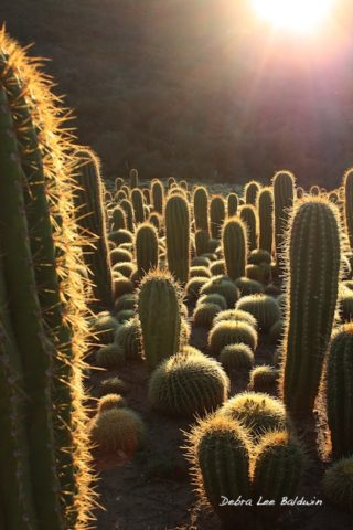 Don't care for cactus? Maybe you've never seen it backlit!
