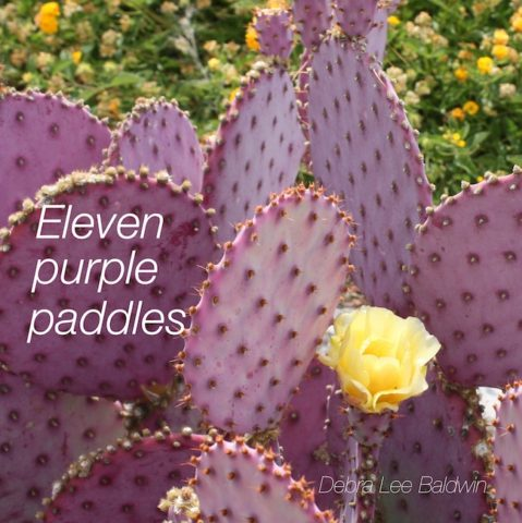 11-purple-paddles_a_2_r