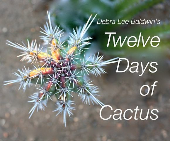 12-days-of-cactus_c_r