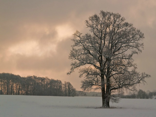 tree-1744759_1280-jpg-tree-in-winter-landscape-121516