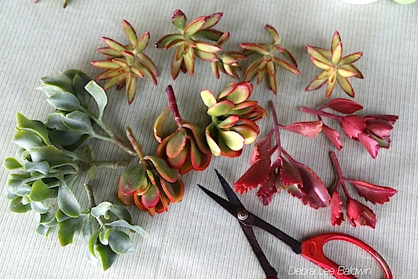 Create a bouquet of succulent cuttings